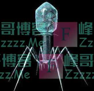 """""""有些生物看起来不像自然产生的,比如噬菌体,俨然是个机器人"""""""