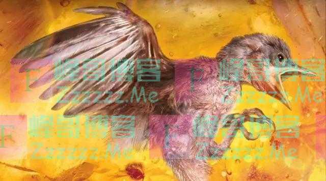 """一只9900万年前的小鸟,被完整""""雪藏""""在一枚9厘米长的琥珀中"""