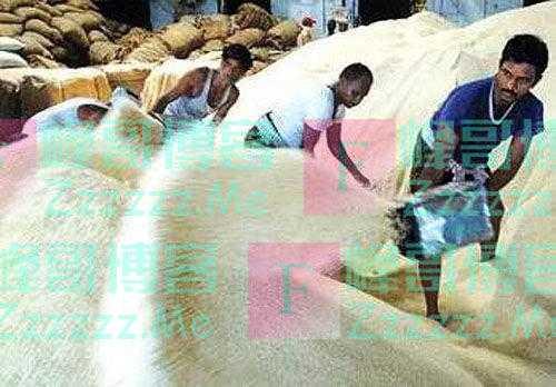 """印度大米被称""""世界上最贵大米"""",为什么只有印度人才能吃得下?"""