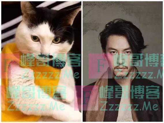 """""""我家猫长得像李荣浩,哈哈哈!"""""""