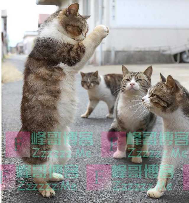 """主人总是习惯性""""摸猫头"""",但你知道在猫咪眼中,意味着什么吗?"""
