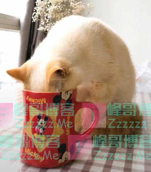 """为什么猫咪总喜欢偷喝主人杯子里的水?其实是猫主子的""""恶作剧"""""""