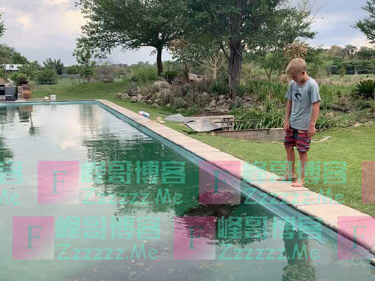 """3吨重河马进泳池避暑,临走留下""""礼物"""",抽干池水后不想说话"""