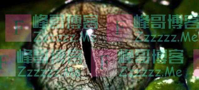 心理学:第一眼你认为哪只是蛇眼?测出你5年后的社会地位!