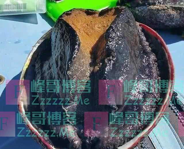 """世界上""""最大""""的鲍鱼,一只够15个人食用,中国为何不引进养殖?"""