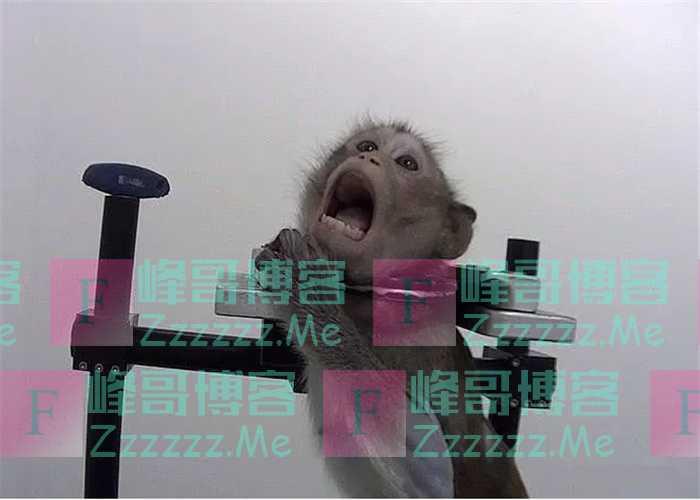 活体动物做实验的实验室,被钳住脖子的猴子,插入喉管的比格犬!