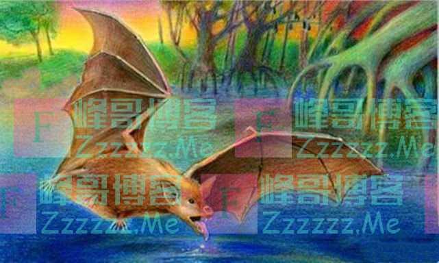有人说蝙蝠是老鼠演化而来的,这可信吗?蝙蝠的起源到底是怎样的