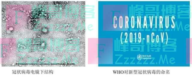 钟南山: 人类冠状病毒再添新成员: 2019-nCoV