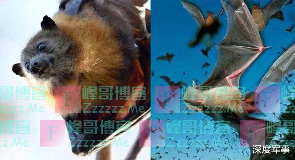 60万吸血蝙蝠袭击澳洲, 数千万人陷入恐慌: 一口咬断人类喉咙