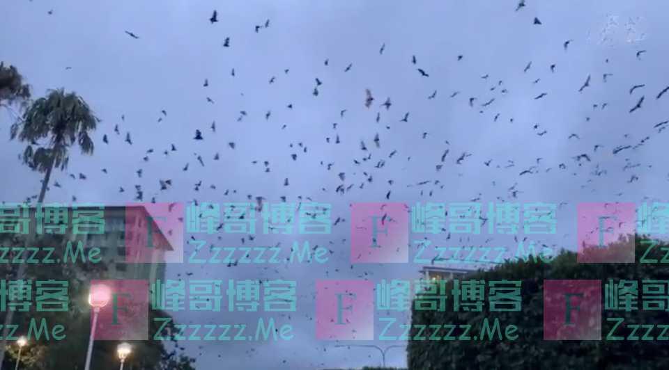 澳洲数十万蝙蝠攻陷城镇,翼展2米主动攻击人类,打了11针疫苗