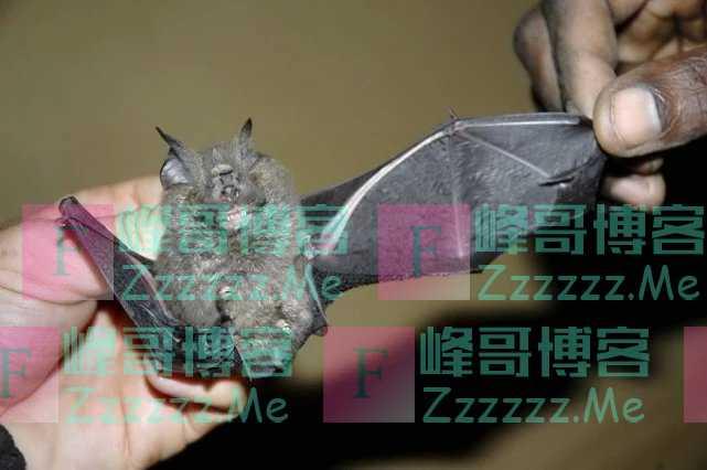 """除了蝙蝠,这6种野味也要""""口下留情"""",最后一种多么痛的领悟"""