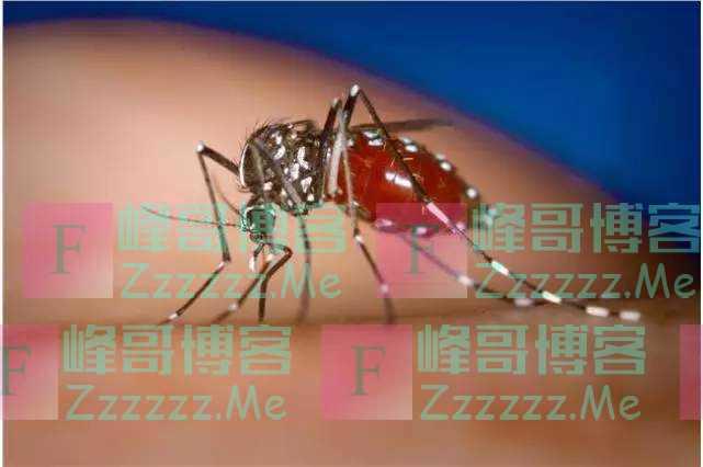 刚被火灾暴雨肆虐,澳大利亚几十种蚊子爆发,疯狂繁殖可传染疾病