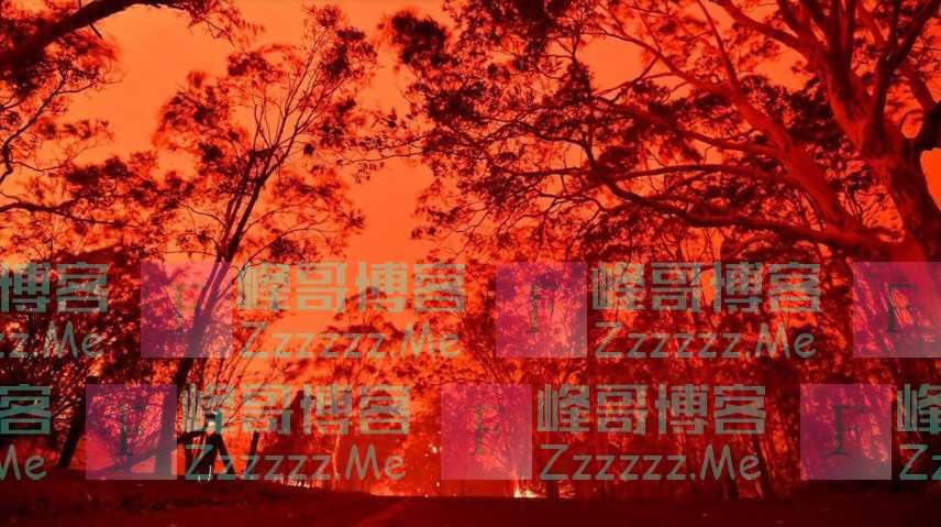 澳洲大火逼出毒王,60万吸血蝙蝠涌入居民区,最糟糕的事情发生了