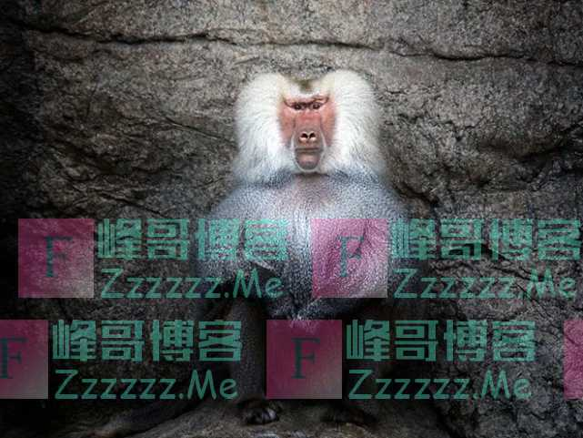 当年移植狒狒心脏的那个女孩,最后成功了,她到底活了多久?