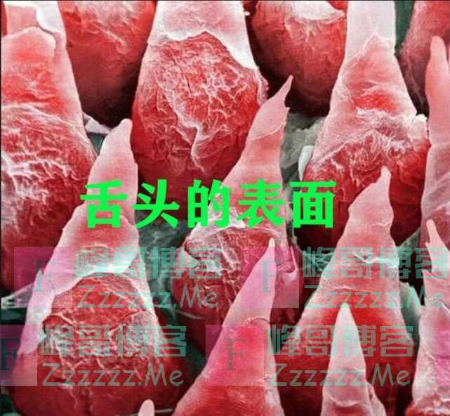 显微镜下的世界有多美?舌头像草莓,看到血液,网友:好想吃
