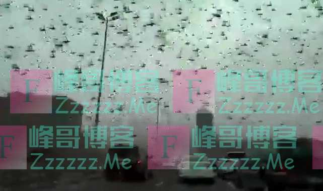 蝗虫铺天盖地飞过巴林,致使城市交通瘫痪,挡风玻璃上都是蝗虫