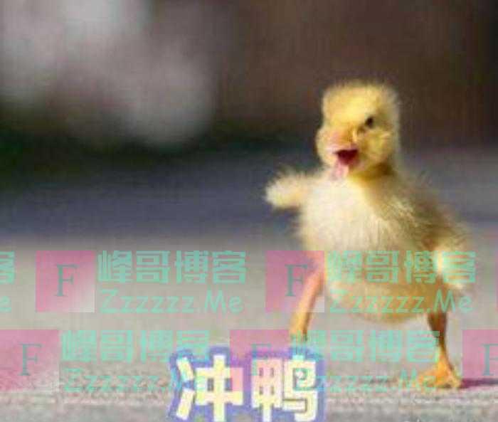 为何中国10万只鸭子出国了?网友表示回来奖赏你