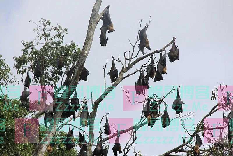 辟谣:蝙蝠携带病毒却不生病,仅仅是体温高那么简单?