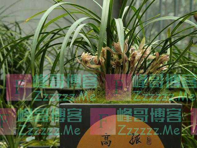 """标价一亿两千万的兰花""""贵州龙""""有人买吗?为什么总有天价兰花"""
