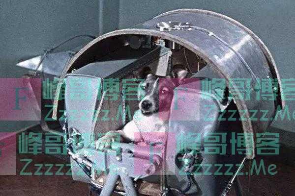 在太空漂流了62年的流浪狗,为人类做出了多大的贡献?
