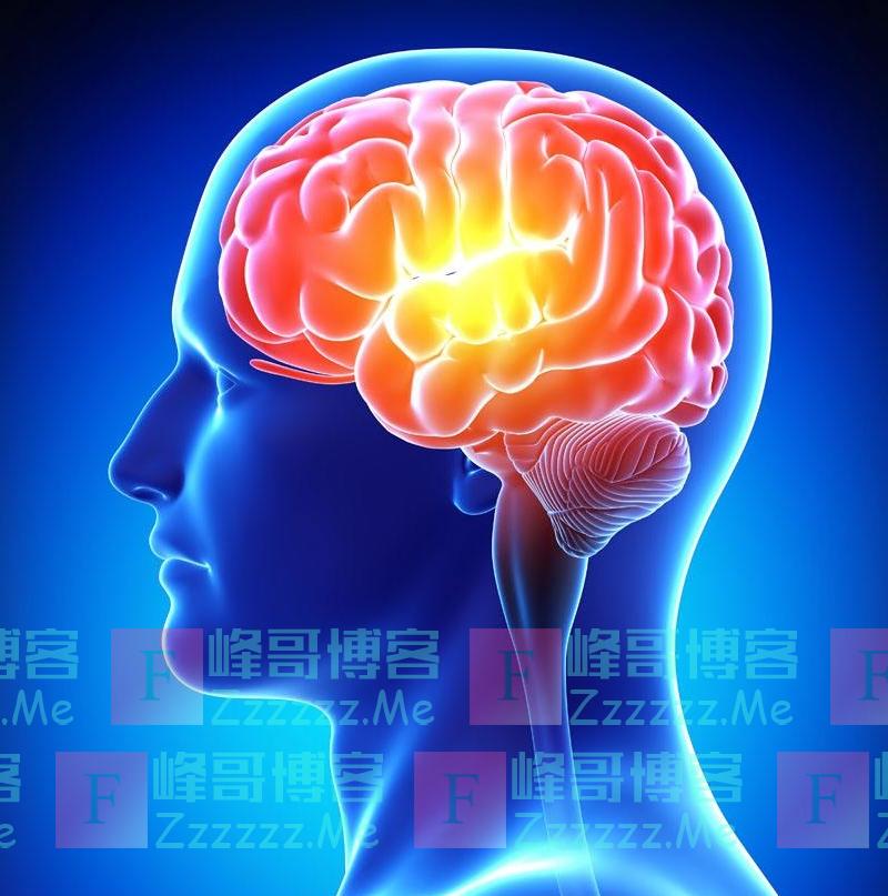 人类大脑中也有细菌群落?科学家这一发现骇人听闻