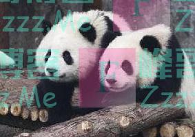 日本网友:中国养的熊猫太脏了,没我们干净!中国网友回应亮了