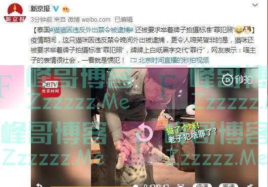 猫咪因违反外出禁令被逮捕,网友:表情很社会,一看就是惯犯!