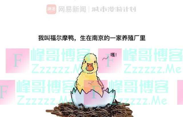 漫画:下辈子还要做一只鸭子,只是不要出生在南京了