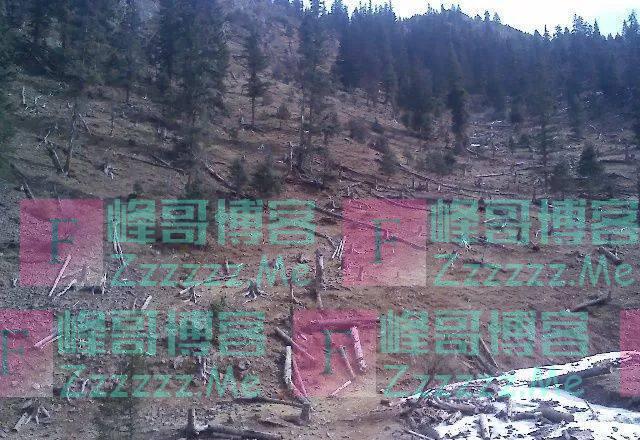 参天大树被砍,非洲原始森林正在消失,当地人称大部分卖给了中国