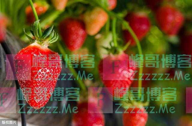 """继草莓后又一高端水果遭遇""""大跳价"""",一个月50元降到10元,难啊"""