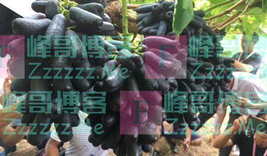 曾1斤卖上百元,才刚被炒红,如今被美国公司告了,要禁止种植?