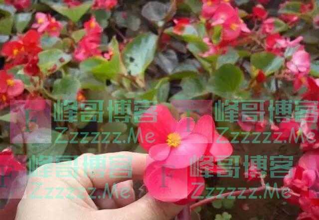养花就养3种花,随便养养就爆盆,一开300多天,全年不断花!