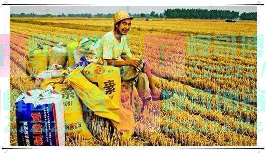 农村多地出现土地荒,专家提出的解决方案,农民们却不认可!