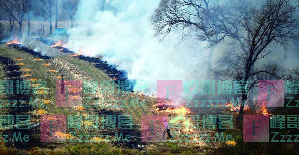 继禁止焚烧秸秆后,专家又建议禁止农民烧煤,农民:不烧煤烧什么