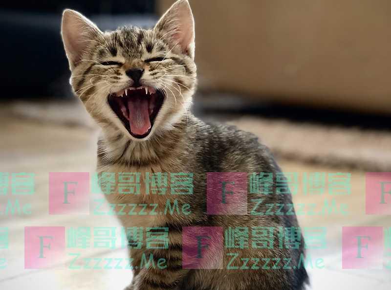 你能够容忍一只呲牙的猫,却无法容忍一只呲牙的狗,知道为啥吗?