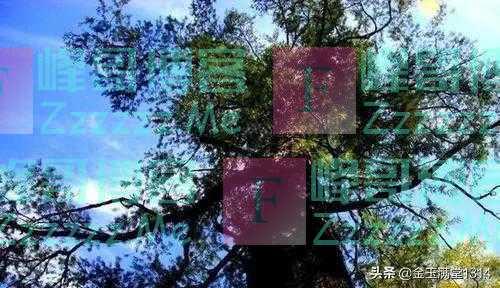 全世界最珍贵的树:全球仅存一棵,365天都有警卫把守,就在中国