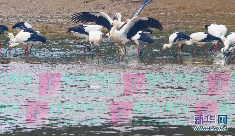 习近平关心湿地保护的故事