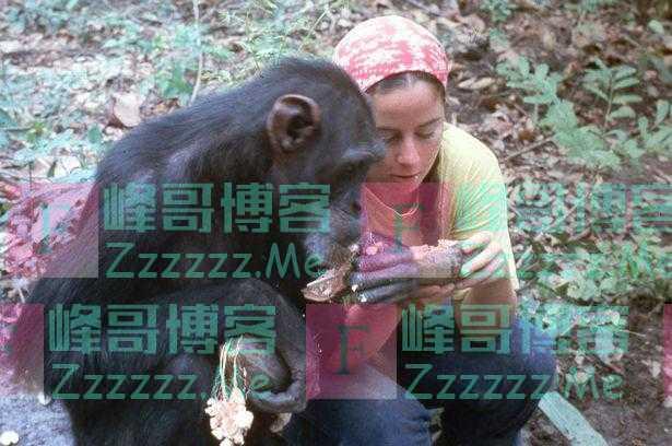 女子在丛林生活6年 只为抚育一只被人类驯化了的黑猩猩