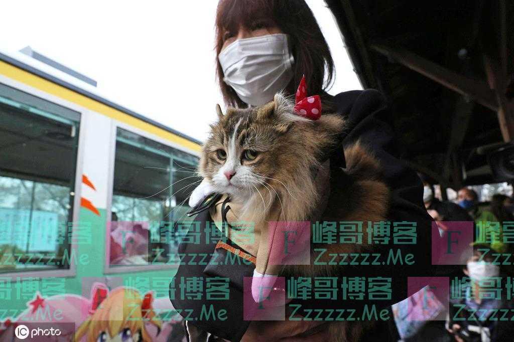 """和人类抢饭碗!日本福岛县车站猫咪""""服务员""""上岗"""