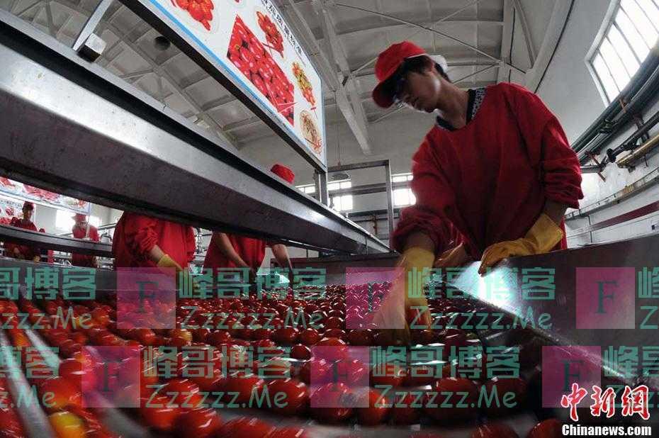 继新疆棉花后,新疆番茄又被他们盯上了!