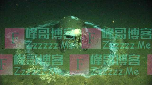 美国加州惊现海底垃圾场,疑似有27000多桶含DDT有毒废水