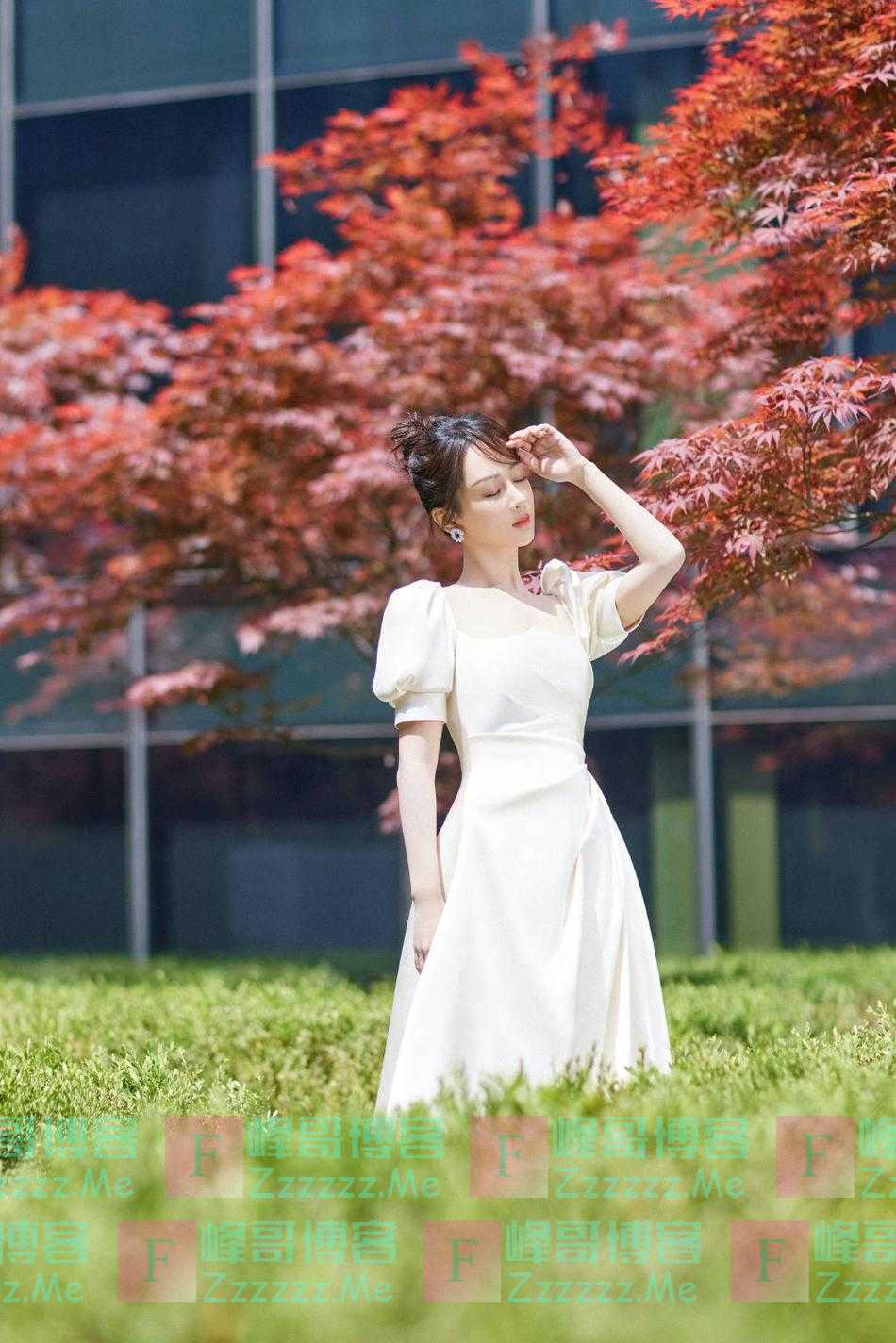 杨紫穿白裙置身红叶中 低头浅笑温婉可人
