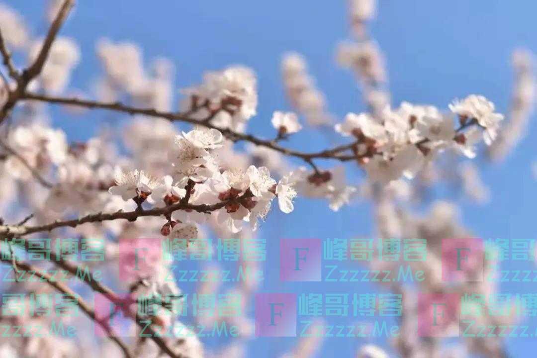 何为春日?阳光春色,还有歌声