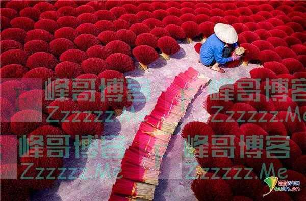 越南工人晾晒成捆香棒 似朵朵珊瑚颜色绚丽