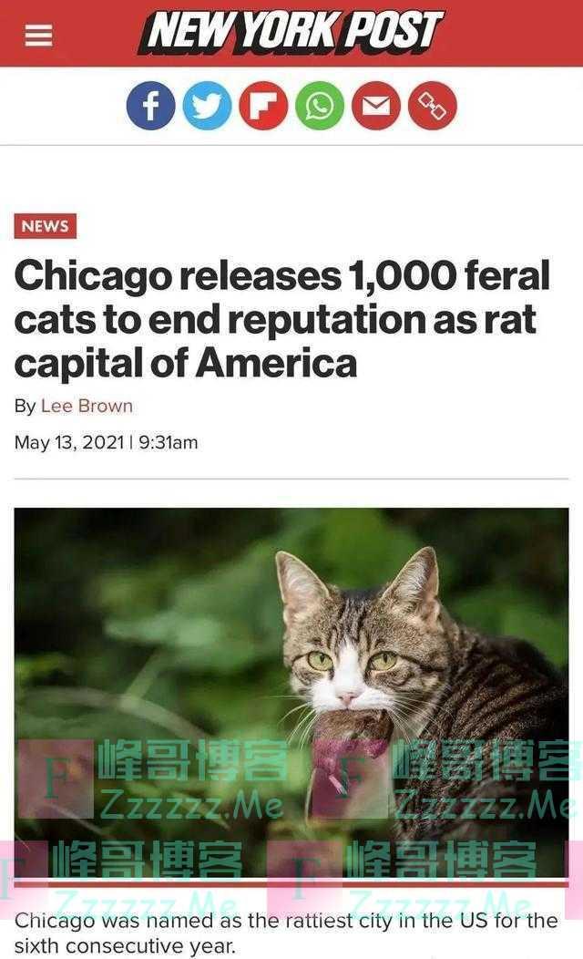"""放大招!""""老鼠之都""""投放千只野猫灭鼠"""