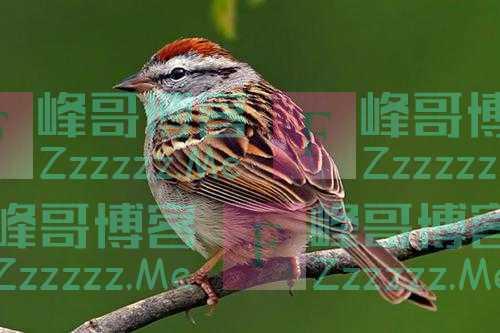 鸟的日常观察