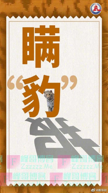 新华社:失踪一个月的杭州第三只豹子去哪了?