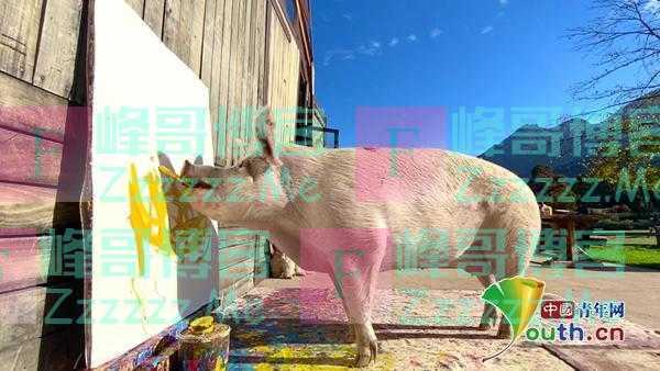 """国外""""猪界毕加索""""会作画 每一幅都卖出高价"""