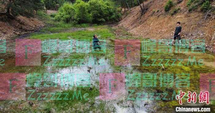 浙江杭州发现数亿年前植物活化石中华水韭