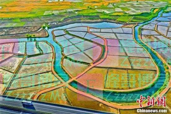 祁连山下的水稻美景 千亩稻田似画卷